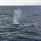 鯨のブロー